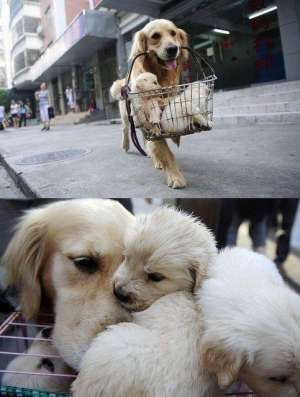关于狗狗的几个感人小故事